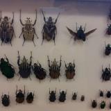 Odwiedziny chrząszczy, październik 2017